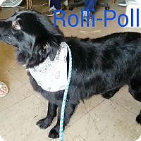 Adopt A Pet :: Rolli (has been adopted) - Buffalo, NY