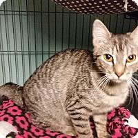 Adopt A Pet :: Cleo - Tomball, TX