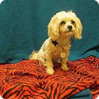Adopt A Pet :: *MARY - Upper Marlboro, MD