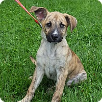 Adopt A Pet :: Jolly Rancher - New Oxford, PA
