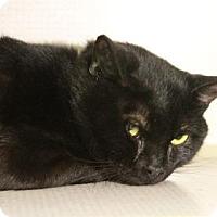 Adopt A Pet :: Igor - E. Brookfield, MA