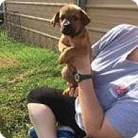Adopt A Pet :: Harland - Rexford, NY