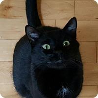Adopt A Pet :: Yin - Marietta, GA