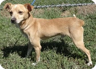 Terrier (Unknown Type, Medium) Mix Dog for adoption in Olive Branch, Mississippi - Chester