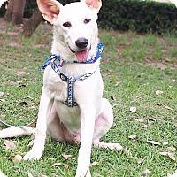 Adopt A Pet :: Cash - Castro Valley, CA