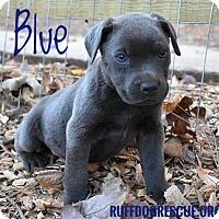 Adopt A Pet :: Blue - Milton, GA