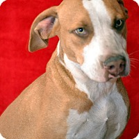 Adopt A Pet :: Rocket - Okeechobee, FL