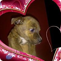 Adopt A Pet :: Jada - Lima, PA