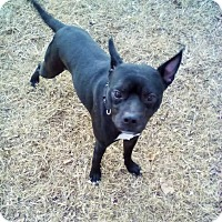 Adopt A Pet :: Buster - Union City, TN