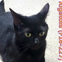 Adopt A Pet :: Rigatoni - Tiffin, OH