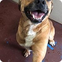 Adopt A Pet :: Coco - Newburgh, IN