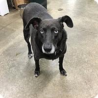 Adopt A Pet :: Tesla - Lake Odessa, MI
