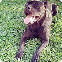 Adopt A Pet :: Jackie - New Orleans, LA