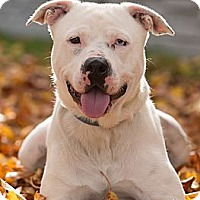 Adopt A Pet :: Rascal aka Krypto - Eugene, OR