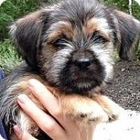 Adopt A Pet :: Benji - 9 wks - Marlton, NJ