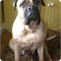 Adopt A Pet :: Lexi - Roy, WA