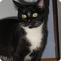 Adopt A Pet :: Hope - Richfield, OH