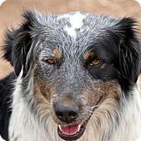 Adopt A Pet :: RAY - San Pedro, CA