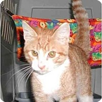 Adopt A Pet :: Engee - Clementon, NJ