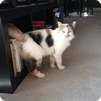 Adopt A Pet :: Picassa - Vancouver, BC