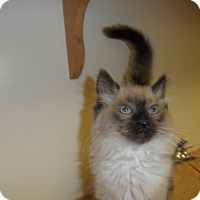 Adopt A Pet :: Winsome - Milwaukee, WI