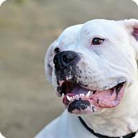 Adopt A Pet :: Clark - Newhall, CA