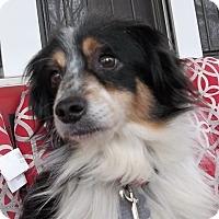 Adopt A Pet :: Virgil - Memphis, TN