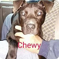 Adopt A Pet :: Chewy - Trenton, NJ