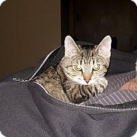 Adopt A Pet :: Sandy - Kohler, WI