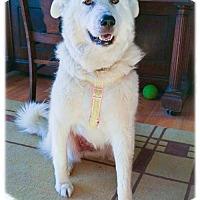 Adopt A Pet :: Oriana - Broomfield, CO