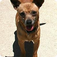 Adopt A Pet :: Chewy - Lufkin, TX