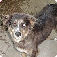 Adopt A Pet :: Dakota (has been adopted) - Rochester, NY