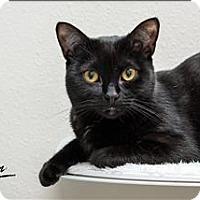 Adopt A Pet :: Jag - Sherwood, OR
