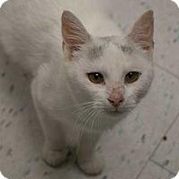 Adopt A Pet :: Sabrina - Toronto, ON