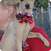 Adopt A Pet :: ELEANOR - Phoenix, AZ