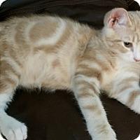 Adopt A Pet :: Glenn - Boise, ID