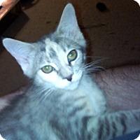 Adopt A Pet :: Bairam - North Highlands, CA