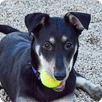 Adopt A Pet :: Ramona - Meridian, ID