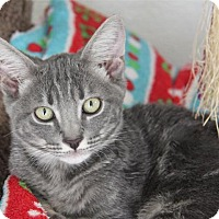Adopt A Pet :: Apollo - Hawthorne, CA