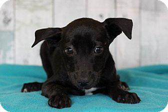 Terrier (Unknown Type, Medium) Mix Puppy for adoption in Waldorf, Maryland - Gina