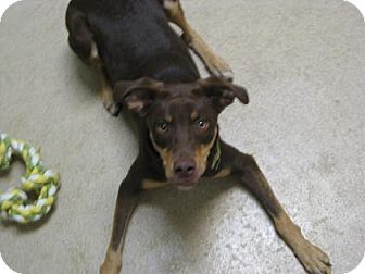 Pointer Mix Dog for adoption in Gary, Indiana - Lady