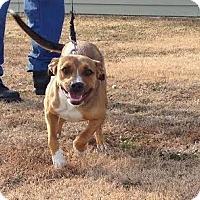 Adopt A Pet :: Zola - Larned, KS