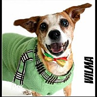 Adopt A Pet :: Wilmah - Scottsdale, AZ