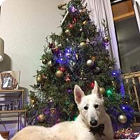 Adopt A Pet :: Apollo - Windermere, FL