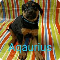 Adopt A Pet :: Aquarius - Garden City, MI