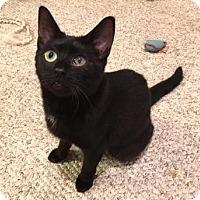 Adopt A Pet :: Belle - Cheltenham, PA