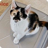 Adopt A Pet :: Jubilee - Polson, MT