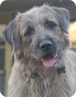 Terrier (Unknown Type, Medium) Mix Dog for adoption in Norwalk, Connecticut - Harbey-@NorwalkDoggyDayCare!!