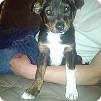 Adopt A Pet :: Jack - Gig Harbor, WA
