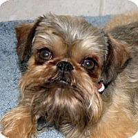 Adopt A Pet :: VOLUNTEERS NEEDED in CA - Los Angeles, CA